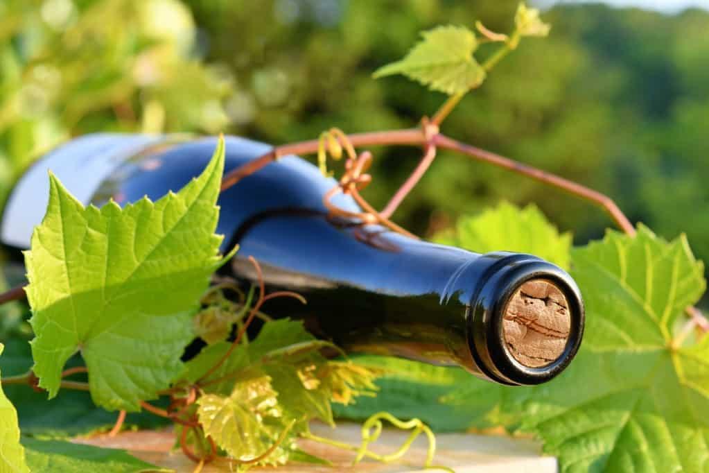 assistant administratif et commerciale viticole occitanie pic saint loup languedoc roussillon cevennes montpellier bureau des viticulteurs